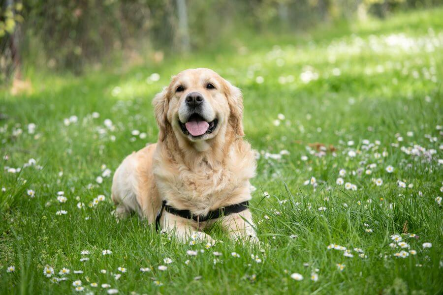 Dog behavior: things dogs do and why they do it