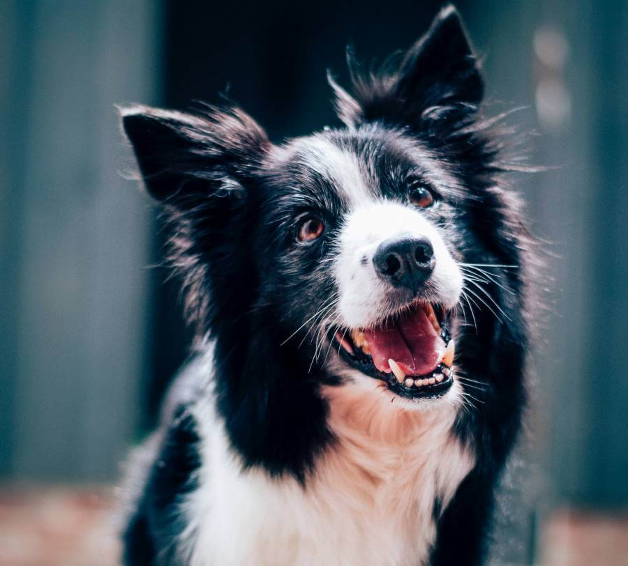 Make your dog happy, 3 easy tips for a happier dog