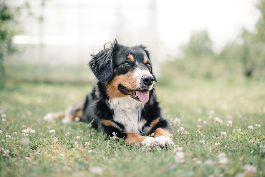 Dogsums best tips for a happy life for your dog.