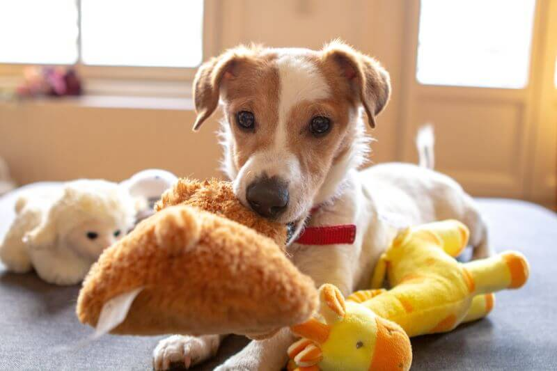best toys for dogs