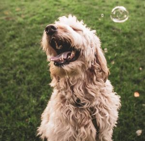 Products for dogs with long hair