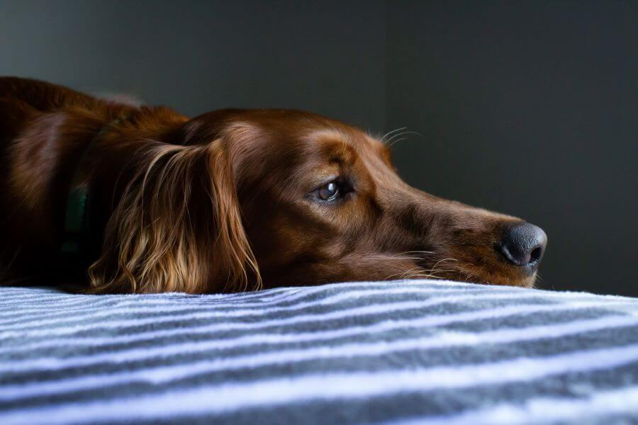 How to keep your dog calm when alone