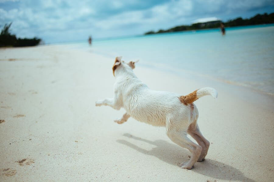 Why dogs run away, and what to do about it.