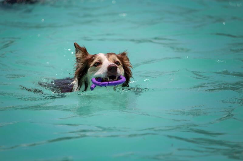 what are the best toys for dogs