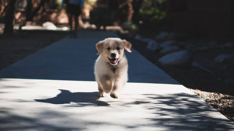 What puppy food should I buy?