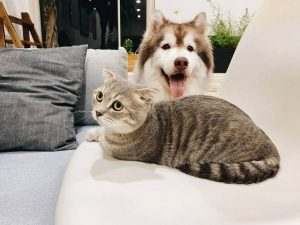 Which dogs are good with cats?