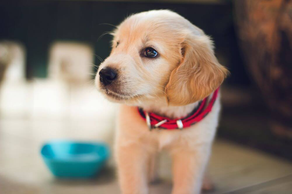 Looking for puppy toys? We help you out!