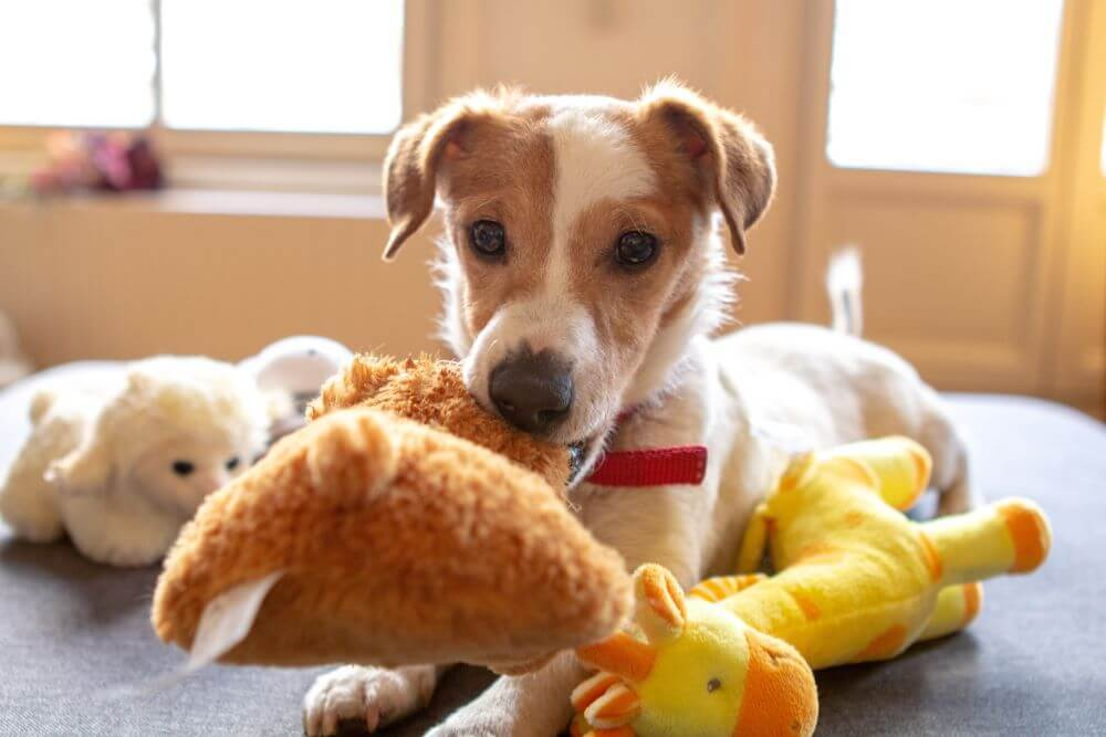 What are the best interactive dog toys?