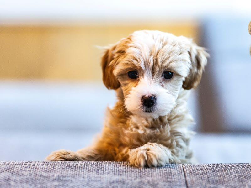 best toys for puppys