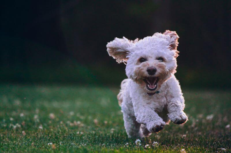 what are the best toys for puppys