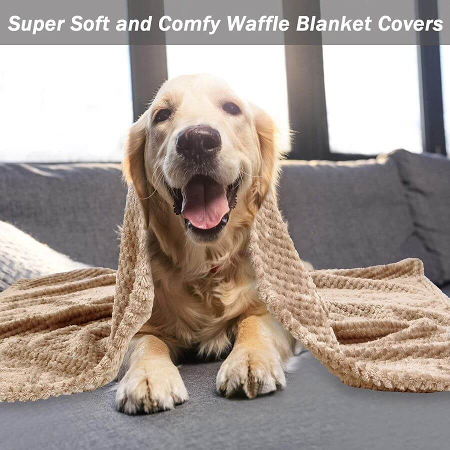 Msicyness puppy blanket