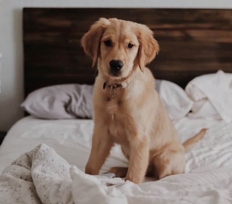Puppy beds, which one is good for your dog?