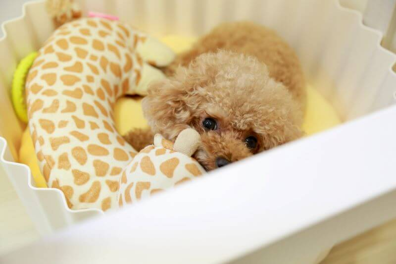 teething toys puppy