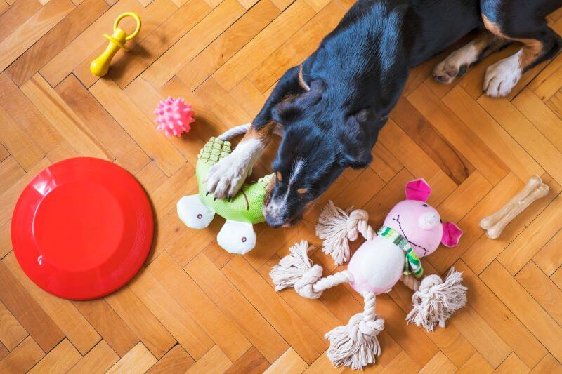 what are good toys for dogs