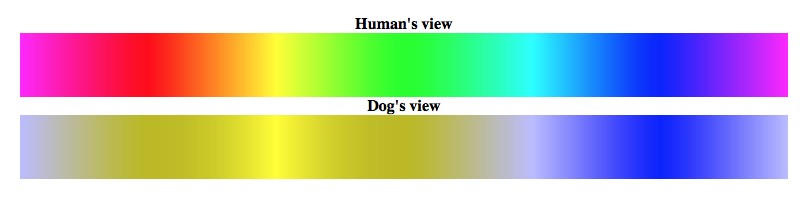 how do dogs see colors